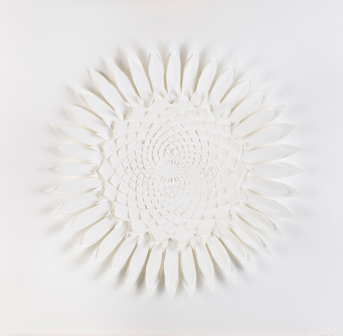07_Flower-2011